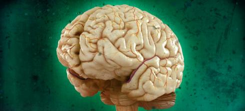 Om hjärnan