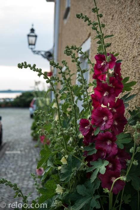 Vadstena - Blommor längs med husvägg