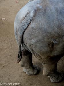 Noshörnings bakdel på Zoologic de Barcelona