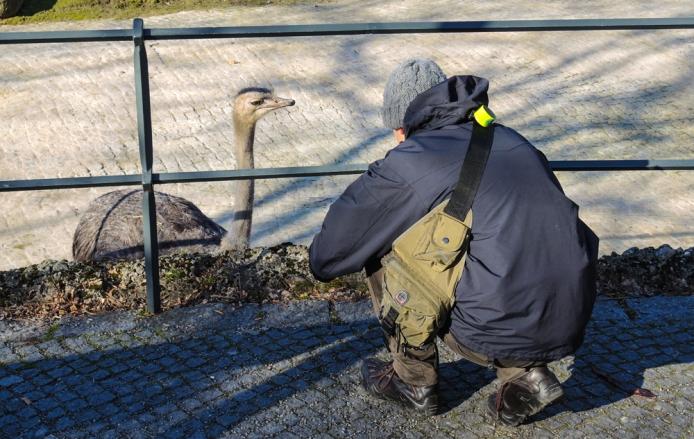 Berlin Zoo - En struts och en Oscar