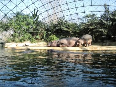 Berlin Zoo - Härlig inomhusoas