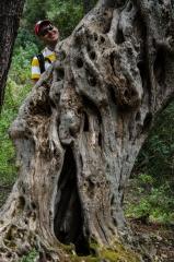 Ett träd vid det konstgjorda vattnet 7 källor