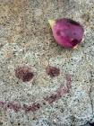 Kaktusblomma och en smiley