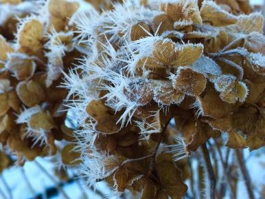 Blommor och is