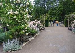Hyde Park vid rosenträdgården