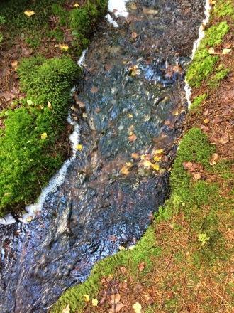 En bäck i skogen