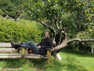 Sittplatser under träd