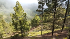 Uppe i bergen mot Roque Nublo
