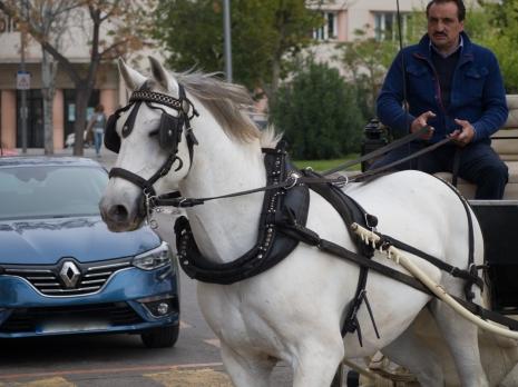 Häst och vagn i Palma